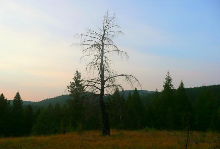 tree_635719916772014210_Afterlight_Edit